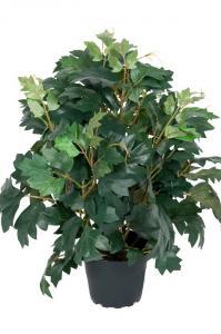 Cissus - Konstväxt - 35 cm
