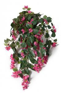 Mr Plant Bougainvillea - Rosa - - www.frokenfraken.se