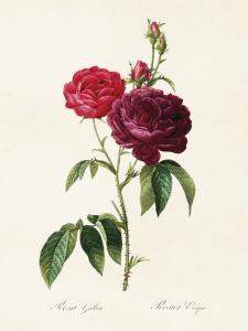 Poster - Vintage - Röd Ros - 18 x 24 cm - www.frokenfraken.se