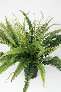 Mr Plant Ormbunke - Grön - 41 cm