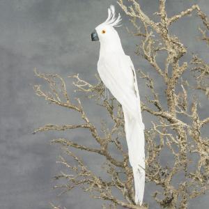 Papegoja - Stor Vit - 50 cm - www.frokenfraken.se
