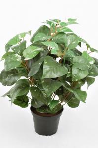 Mr Plant Gullranka - Grön - 35 cm - www.frokenfraken.se