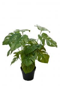 Mr Plant Monstera - Grön - 30 cm