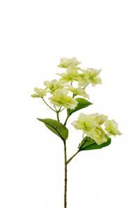 Mr Plant Hortensia - Grön - 50 cm - www.frokenfraken.se
