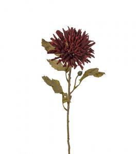 Chrysanthemum - Burgundy - 60 cm - www.frokenfraken.se