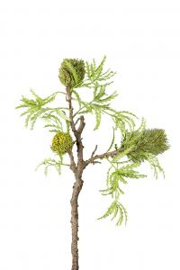 Banksia - Grön - 85 cm - www.frokenfraken.se