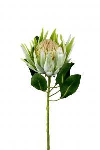 Protea - Grön - 70 cm - www.frokenfraken.se