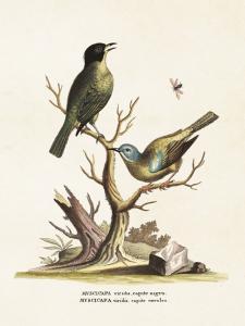 Poster - Vintage - Två fåglar - 18 x 24 cm - www.frokenfraken.se