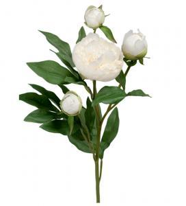 Mr Plant Pion - 65 cm