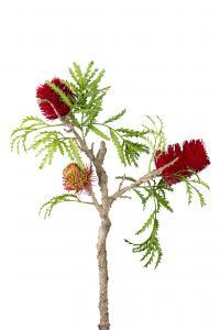 Banksia - Lila - 85 cm - www.frokenfraken.se
