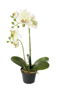Phalaenopis - Orkidé Vit - Konstväxt - 42 cm - www.frokenfraken.se