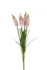 Pärlhyacint - Rosa - 30 cm - www.frokenfraken.se