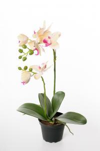 Phalaenopsis - Gul - 45 cm - www.frokenfraken.se