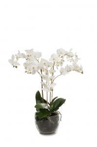 Phalaenopsis - Vit - 70 cm - www.frokenfraken.se