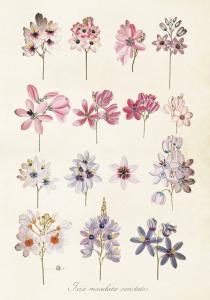 Poster - Vintage - Ixia detaljer - 35x50 cm - www.frokenfraken.se