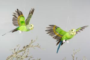 Fåglar - 2 st - Gröna Undulater Flygande - 25 cm - www.frokenfraken.se