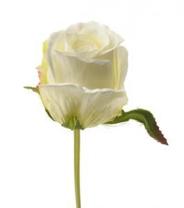Mr Plant Ros - Vit knoppig sidenros - 25 cm