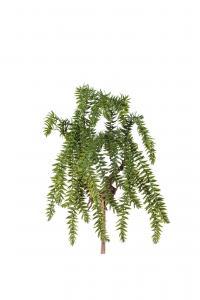 Lummer - Grön - 50 cm - www.frokenfraken.se
