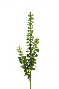 Succulent - Grön - 85 cm - www.frokenfraken.se