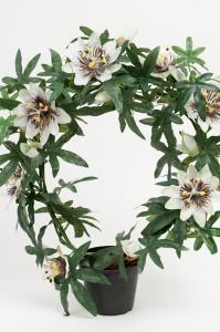 Passiflora - Vit - 40 cm - www.frokenfraken.se