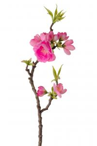 Äppelblom - Rosa - 40 cm - www.frokenfraken.se