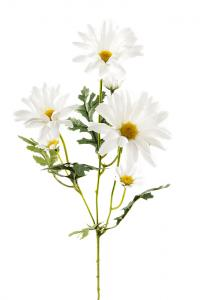 Mr Plant Prästkrage - Naturtrogen snittblomma