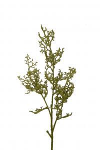 Mr Plant Mosskvistar - 12 st - Grön - 85 cm