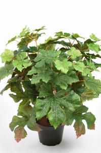 Mr Plant Vin - Grön - 35 cm