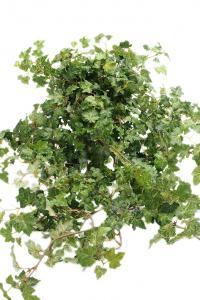 Murgröna - Konstväxt - 85 cm - www.frokenfraken.se