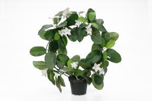 Mr Plant Doftranka - Vit - 40 cm