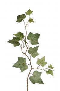 Murgröna - Grön - 45 cm - www.frokenfraken.se