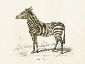 Poster - Vintage - Zebra - 18x24 cm - www.frokenfraken.se