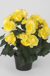 Begonia - Gul - 28 cm - www.frokenfraken.se