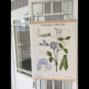 Grunne Posterhängare - Björk - till 50x70 cm