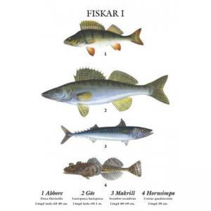 Skolplansch - Fiskar - Liten - 32 x 45 cm - www.frokenfraken.se