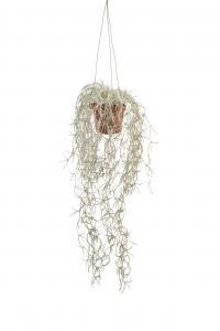 Mr Plant Tillandisa - Grön - 45 cm - www.frokenfraken.se