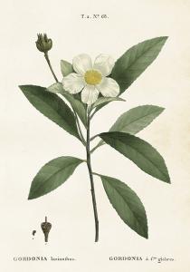 Poster - Vintage - Gardenia - 35x50 cm - www.frokenfraken.se