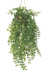 Mr Plant Pilea - Grön - 52 cm