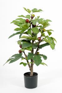 Mr Plant Fikon - Grön - 65 cm - www.frokenfraken.se
