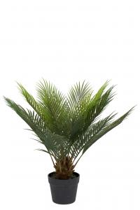 Mr Plant Cycas - Grön - 60 cm - www.frokenfraken.se