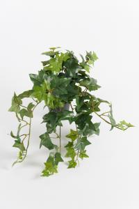 Murgröna - Grön - 25 cm - www.frokenfraken.se