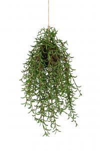 Mr Plant Rhipsalis - Grön -