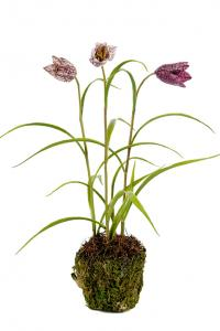 Frittilaria - Lila - Konstväxt - 25 cm - www.frokenfraken.se