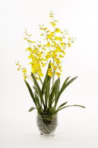 Mr Plant Oncidium - Gul - 110 cm - www.frokenfraken.se