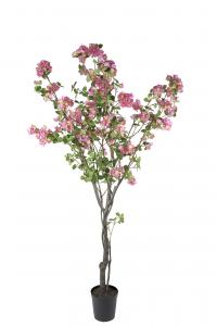Mr Plant Bougainvillea - - 240 cm - www.frokenfraken.se