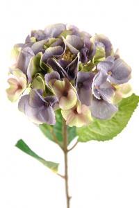 Mr Plant Hortensia - Smutslila sidenblomma - Ø18 cm