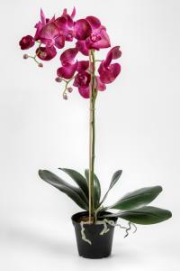 Phalaenopsis - Lila - 60 cm - www.frokenfraken.se