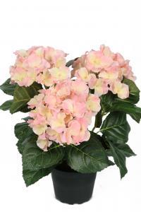 Hortensia - Rosa - 30 cm - www.frokenfraken.se