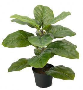 Mr Plant Fiolfikus - Konstväxt - 40 cm