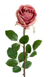 Mr Plant Ros - Gammelrosa långskaftad sidenros - 75 cm